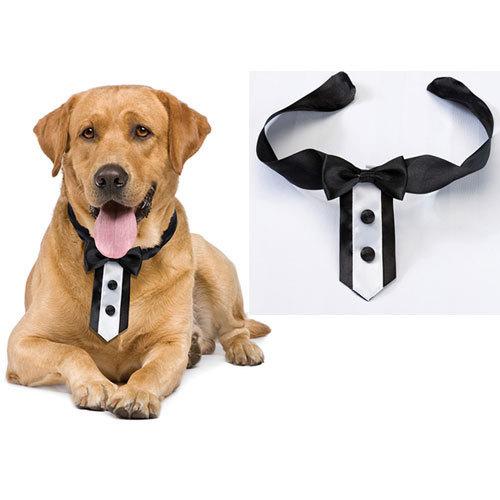collar_para_perros