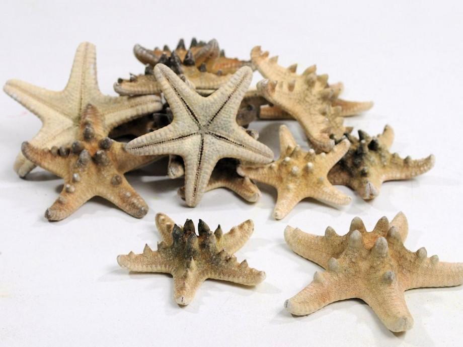 Estrella de mar starfish